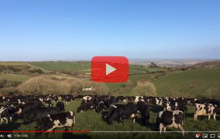 Spring at Trink Dairy 2020