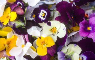 Trink Dairy Farm Suppliers - Mel's Flowers